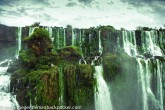 Jungle, Water, Sky
