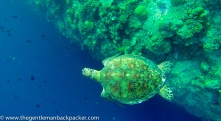"""""""Peering into the abyss"""": What does the future hold for sea turtles and other endangered species in our oceans? The sea wall at Sipadan falls 6,000 feet to the ocean floor below."""